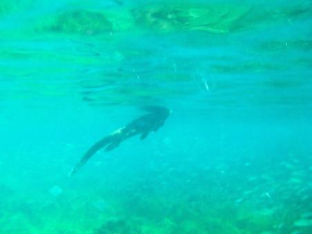 Kicker Rock - Marine Iguana