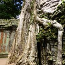 - Angkor, Siem Reap