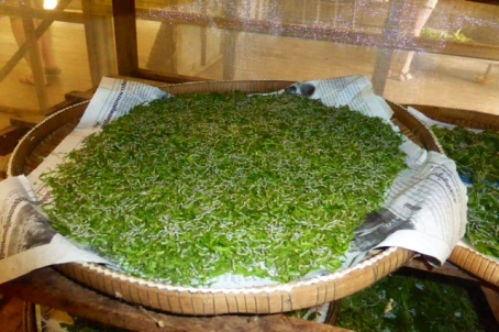 Silk worms - Siem Reap