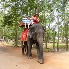 Hello Elepant - Angkor, Siem Reap