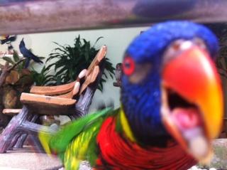 Bird Park, KL